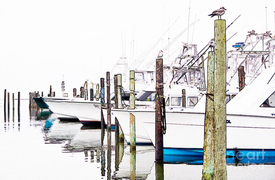 Outer Banks Photograph - Waiting For Food - Outer Banks by Dan Carmichael