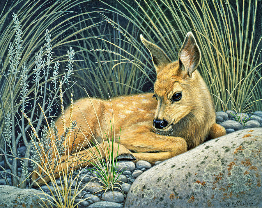 Wildlife Painting - Waiting For Mom-mule Deer Fawn by Paul Krapf