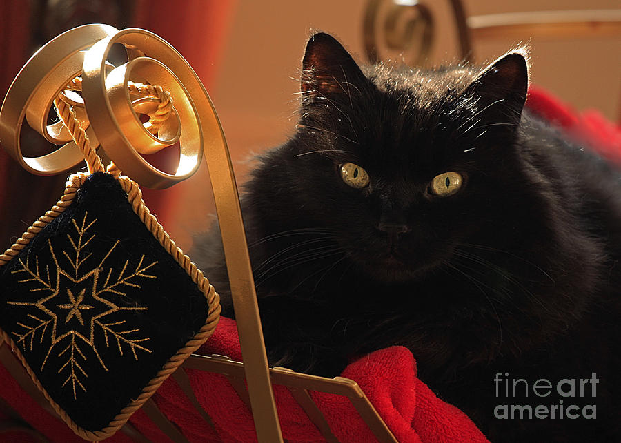 Black Cat Photograph - Waiting For Santa To Arrive by Inspired Nature Photography Fine Art Photography