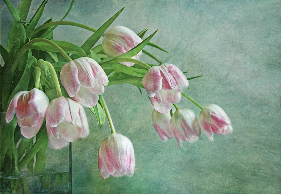 Tulip Photograph - Waiting For Spring by Claudia Moeckel