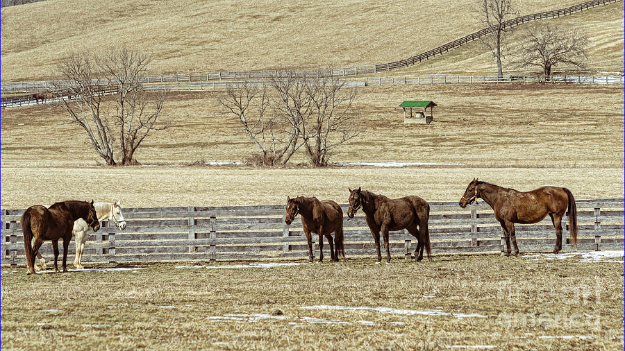 Horse Photograph - Waiting For Spring by Joe McCormack Jr