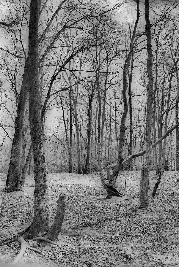 Forest Photograph - Waiting For Spring by Thomas  MacPherson Jr