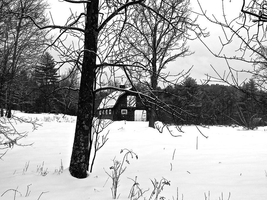 Snow Photograph - Waiting For The Barn Dance 3 by Elizabeth Tillar
