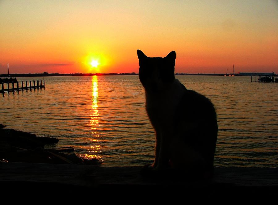Cats Photograph - Waiting For The Shrimpers To Come In With Their Catch by Julie Dant