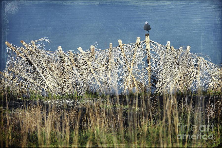 Landscapes Photograph - Waiting For You by Ellen Cotton