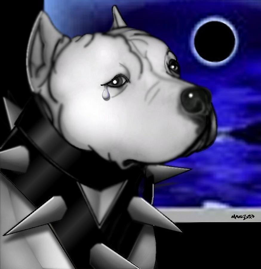 Dog Drawing - Waiting by Maestro Ruiz