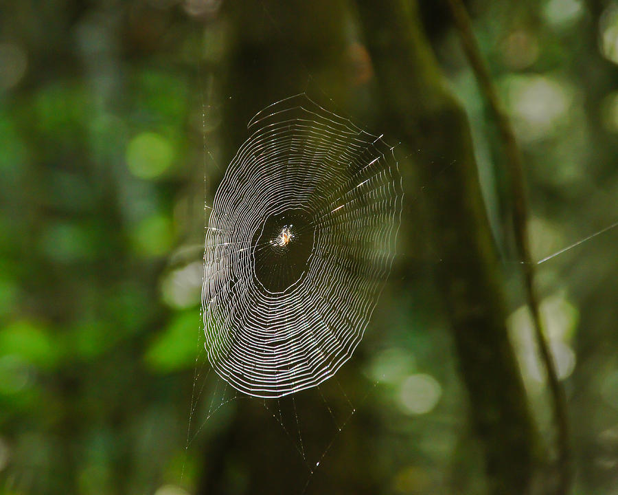 Belknap Photograph - Waiting On The Web by RockyBranch Dreams