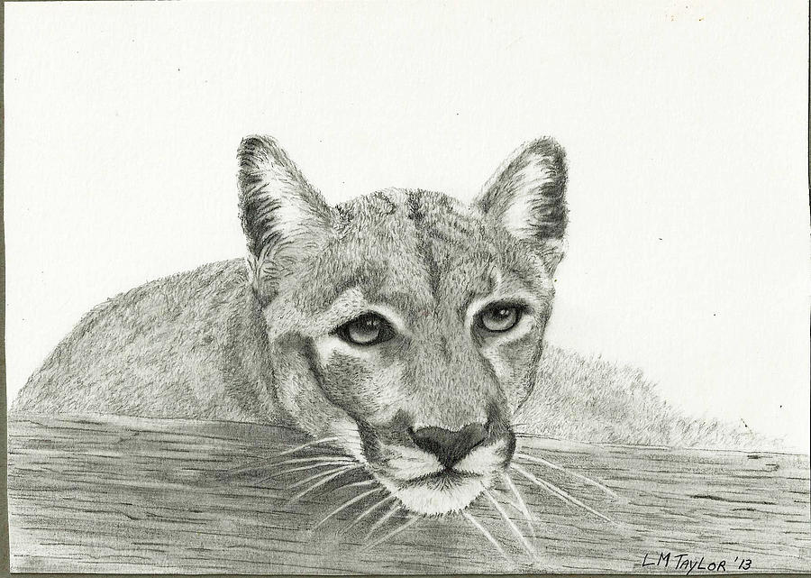 Panther Drawing - Waiting Patiently by Linda Taylor