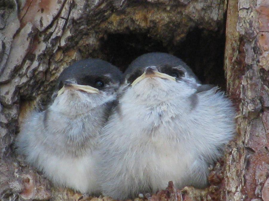 Bird Photograph - Waiting by Steven Parker