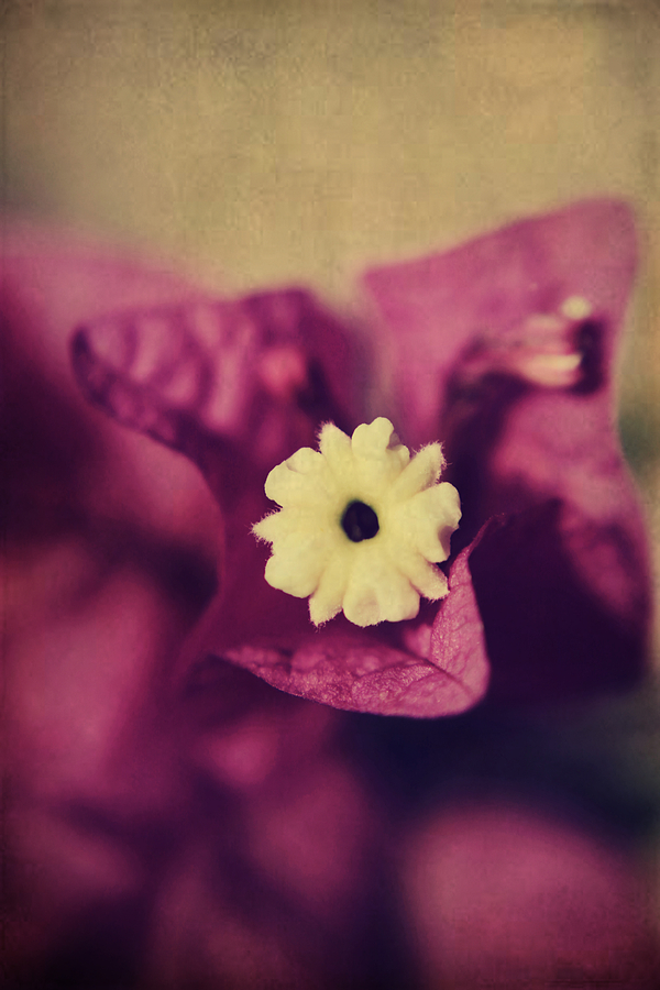Flowers Photograph - Waking Up Happy by Laurie Search