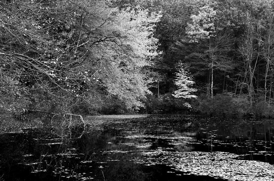 Walden Photograph - Walden Pond by Christian Heeb
