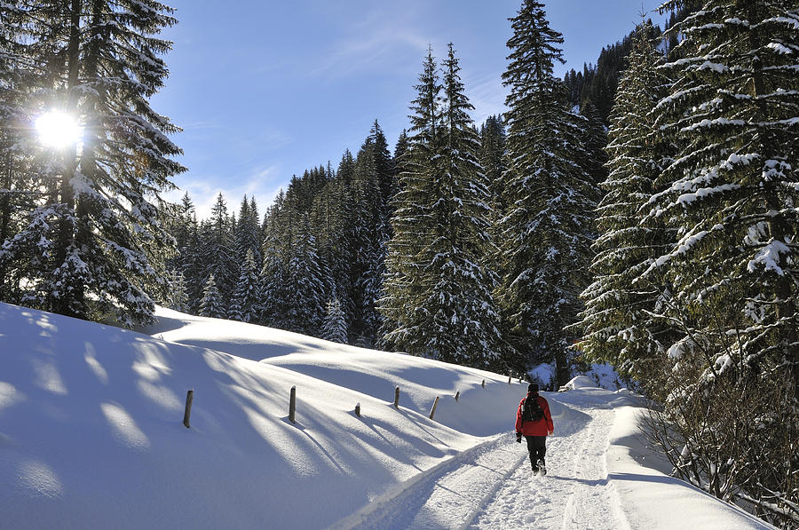 Winter Photograph - Walk In Sunny Winter Landscape by Matthias Hauser