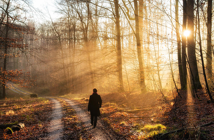 Image result for walk in sunlight nature