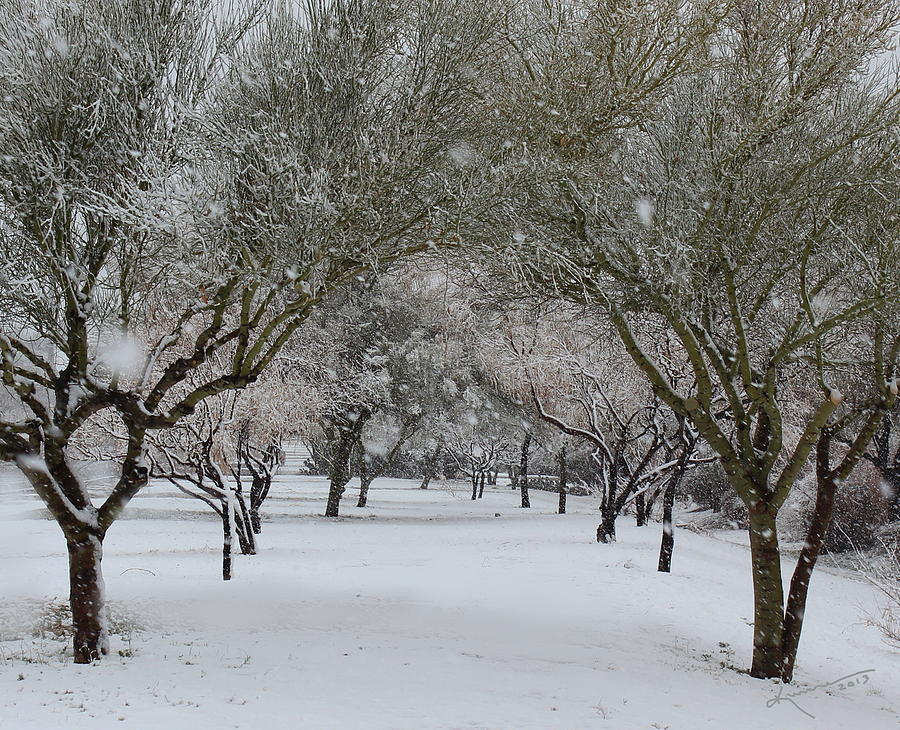 Walk With Me In The Snow Photograph