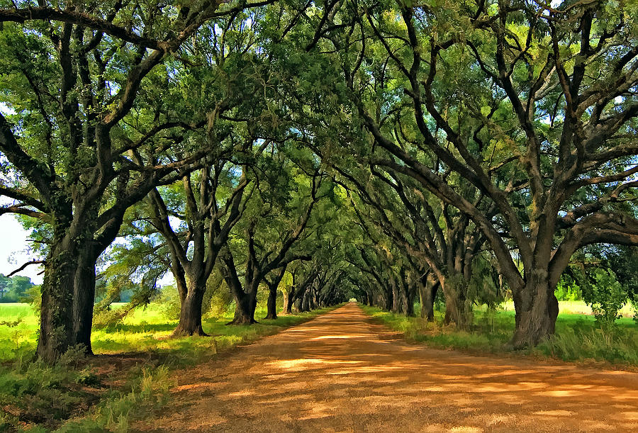 Evergreen Plantation Photograph - Walk With Me Paint Version by Steve Harrington
