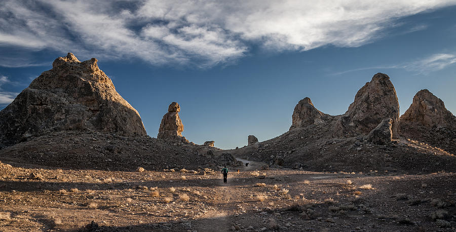 Walking Among Giants Photograph