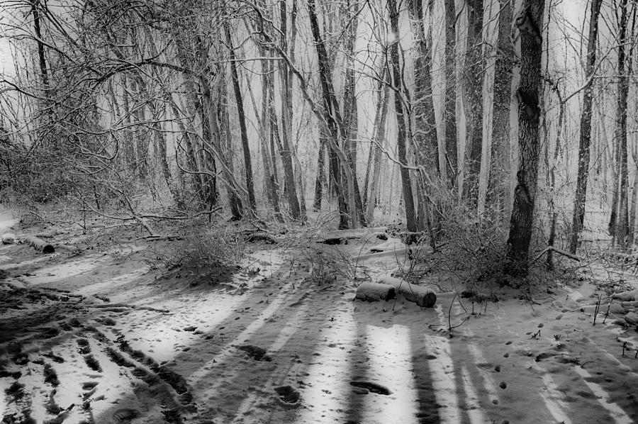 Winter Photograph - Walking  Amongst Shadows by Thomas  MacPherson Jr