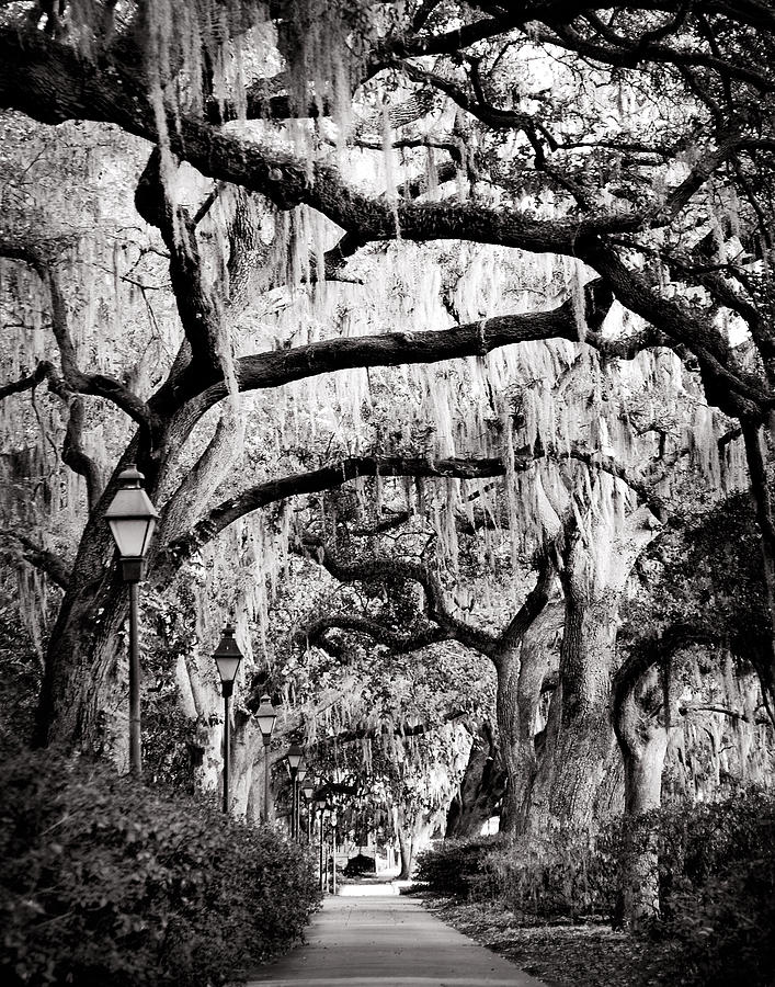 Walking in Forsyth Park in Black and White by Val Stone Creager