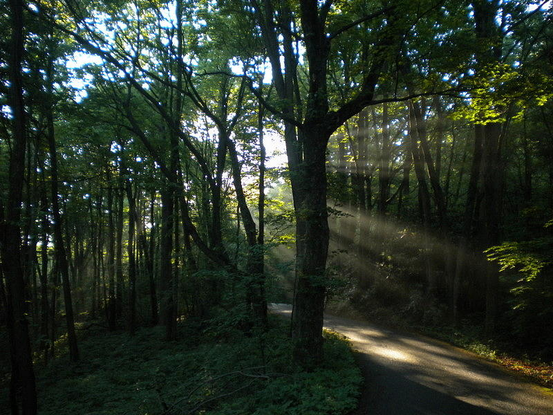 Sunbeam Photograph - Walking In The Light by Diannah Lynch