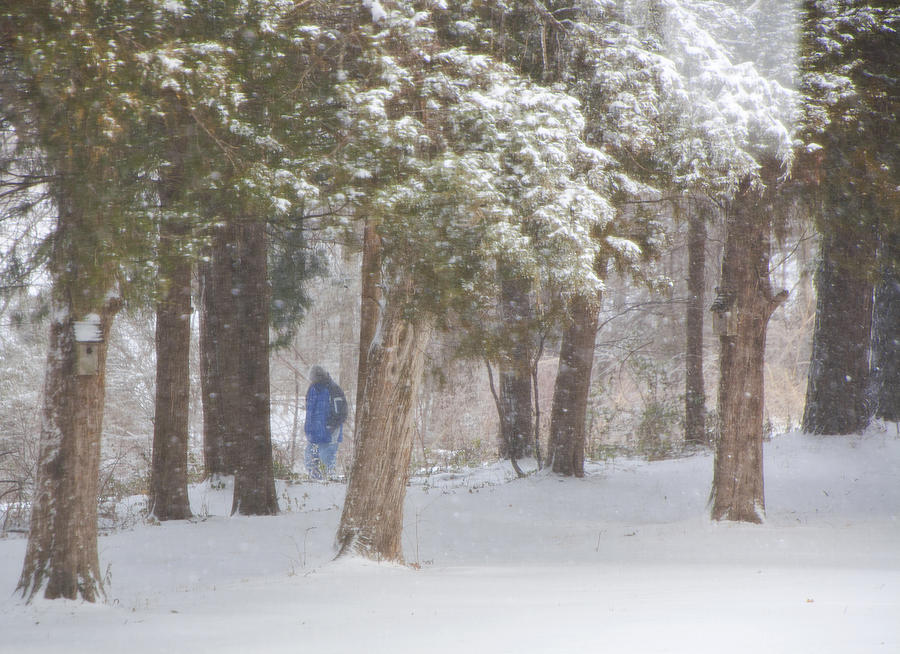 Snow Photograph - Walking In The Snow by Iris Page