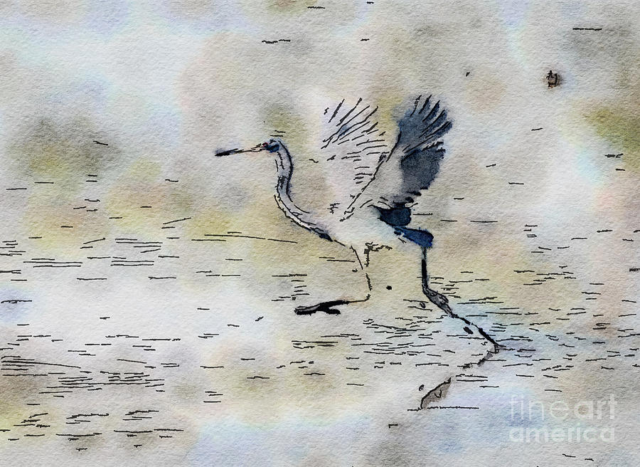 Walking On Water - Tricolored Heron Photograph