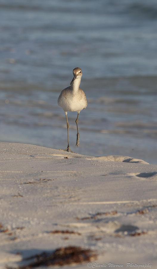 Beach Pyrography - Walking Tall by Charles Warren