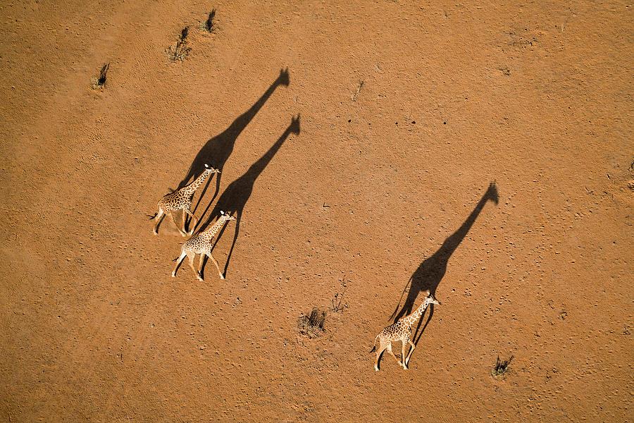 Kenya Photograph - Walking Under Sunset by John Fan