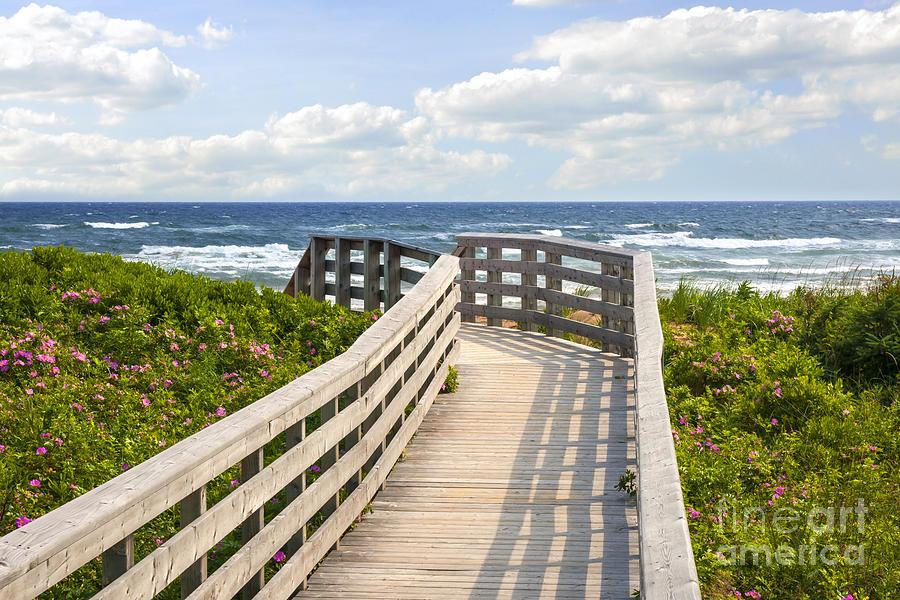 Ocean Photograph - Walkway To Ocean Beach by Elena Elisseeva