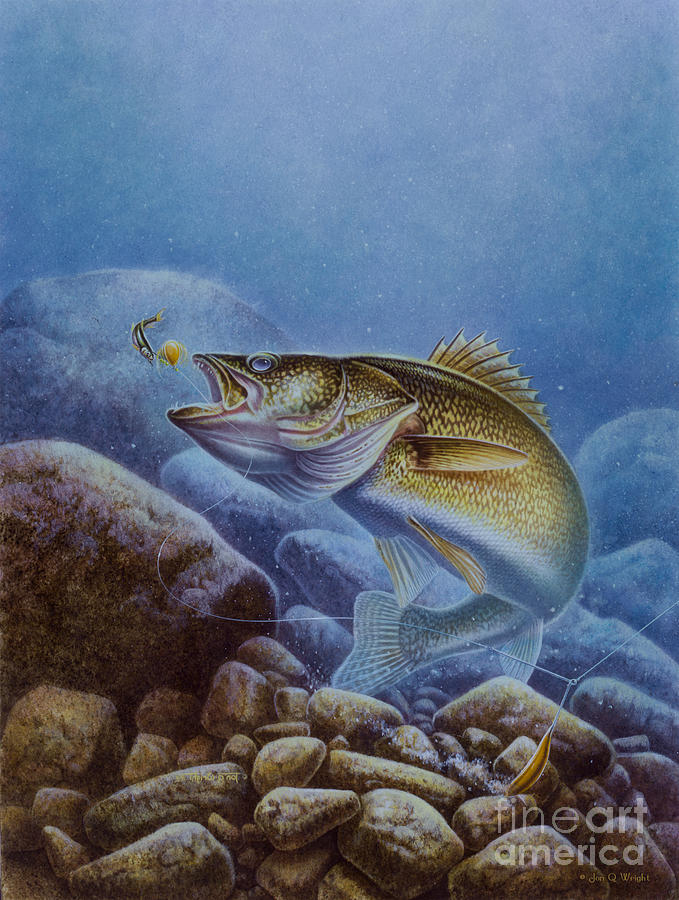 Jon Q Wright Painting - Walleye And Lindy by Jon Q Wright