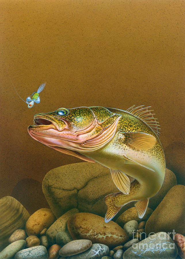 Jon Q Wright Painting - Walleye And Spinner Jig by Jon Q Wright