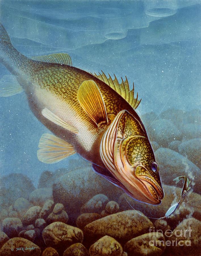 Walleye Ice Fishing Painting By Jon Q Wright