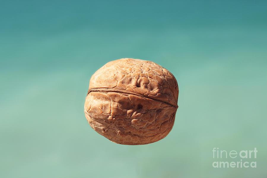 Food Photograph - Walnut. by Alexandr  Malyshev