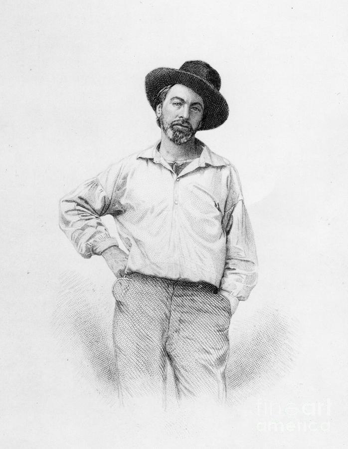 Writer Drawing - Walt Whitman Frontispiece To Leaves Of Grass by American School
