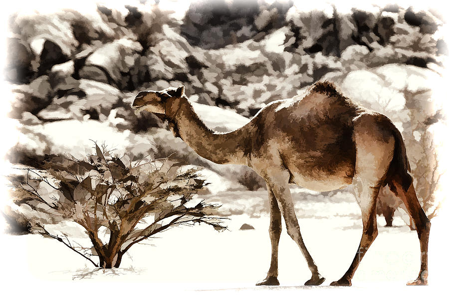 Camel Photograph - Wanderer by George Paris