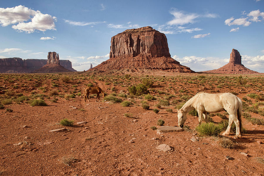 Wandering Horse At Monument Valley Photograph by Dave Stamboulis Travel Photography