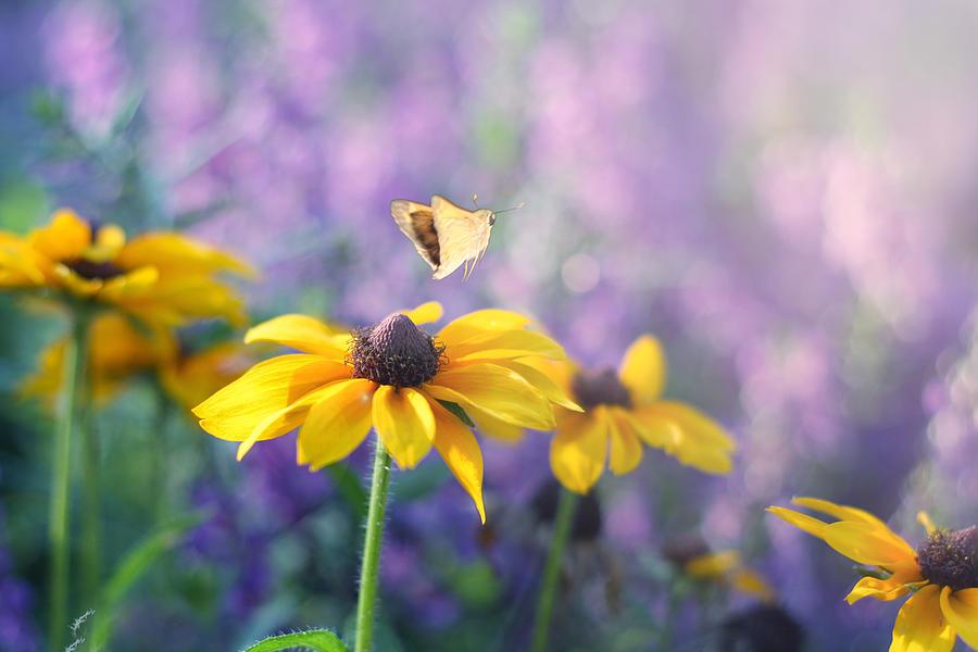 Butterflies On Flowers Photograph - Wanderlust by Amy Tyler