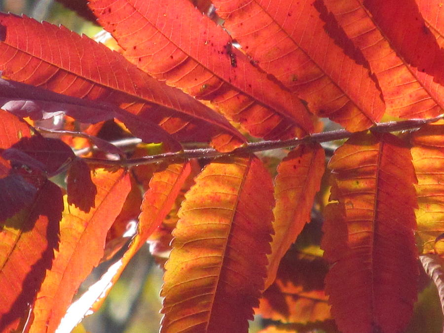Nature Photograph - Warm Autumn Sun by Loretta Pokorny