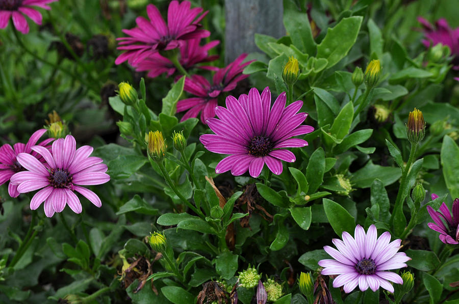 Flower Photograph - Warm Elegance by Larry Jones
