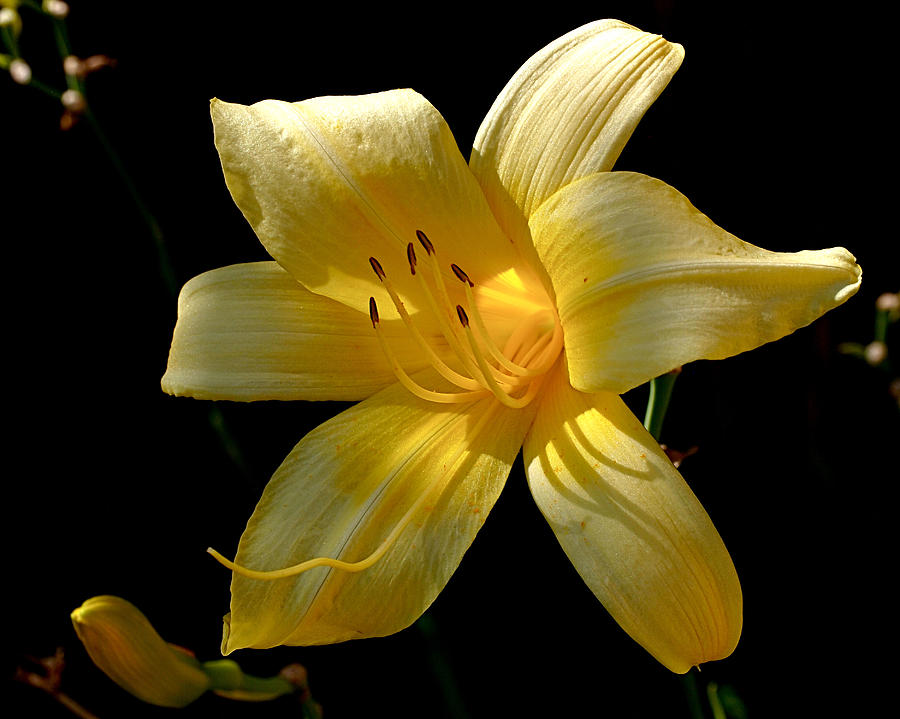 Lily Photograph - Warm Glow by Rona Black