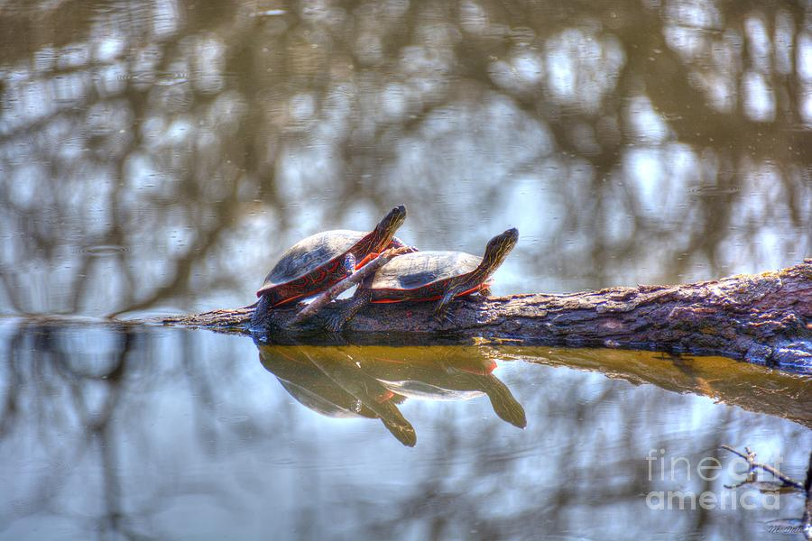 Water Photograph - Warming In The Springtime Sun by M Dale