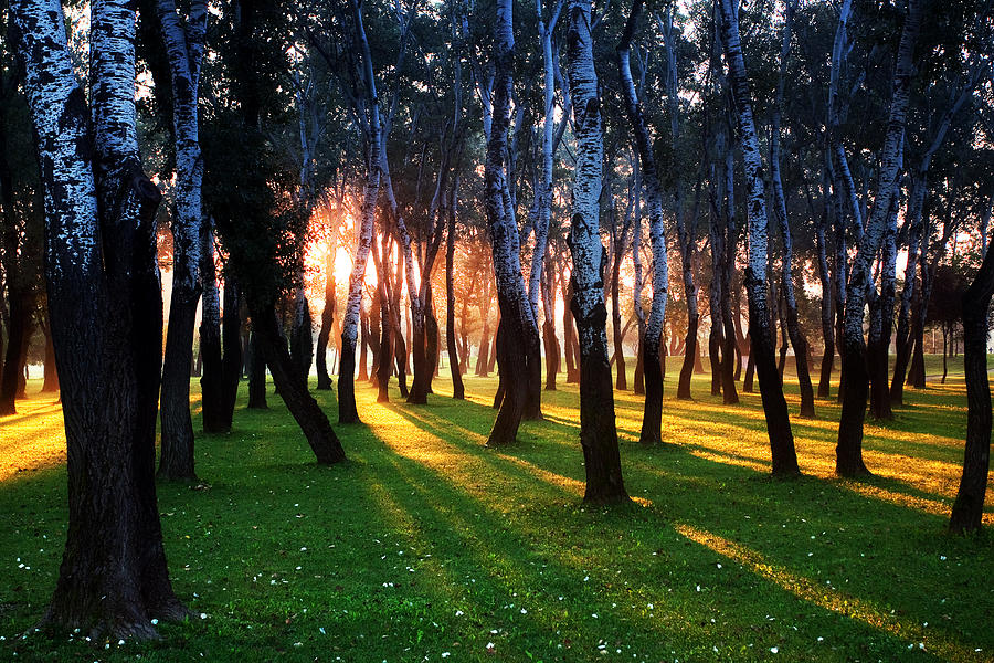 Sun Rays Through Trees Photograph - Warming Up The Land by Daniel Zrno