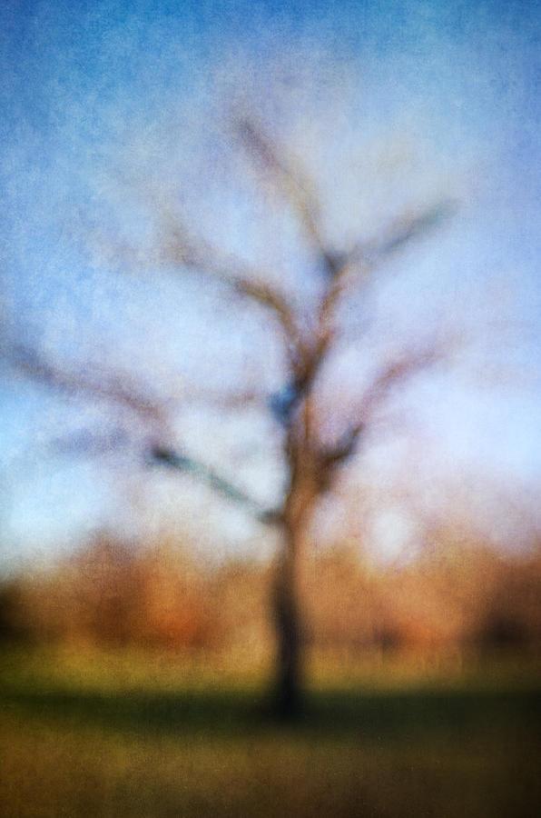 Blur Photograph - Warner Park Tree by David Morel