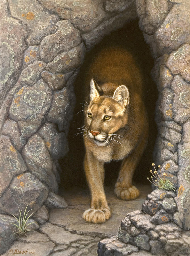Wary Appearance Cougar Painting By Paul Krapf