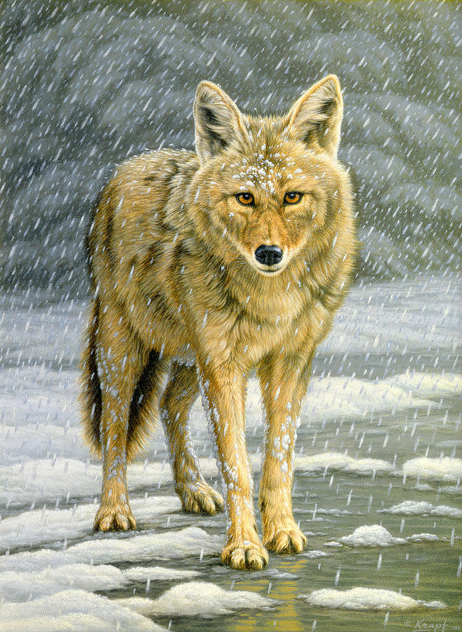 Wildlife Painting - Wary Approach - Coyote by Paul Krapf