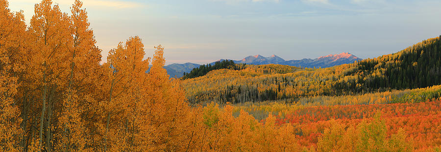 Aspens Photograph - Wasatch Gold by Johnny Adolphson