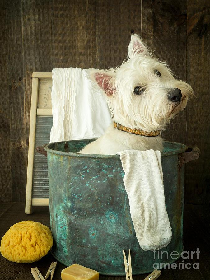 Dog Photograph - Wash Day by Edward Fielding