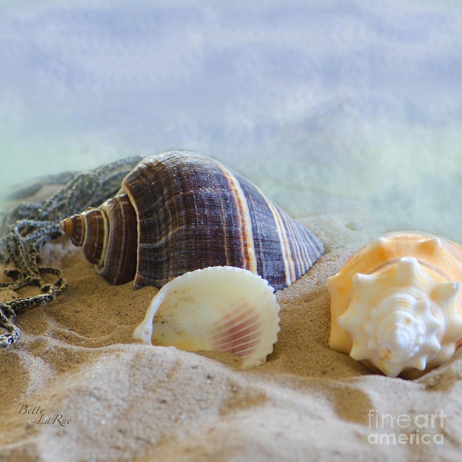 Seashell Photograph - Washed Ashore by Betty LaRue