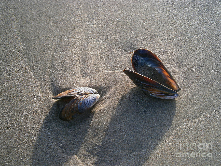 Shells Photograph - Washed Up by Drew Shourd