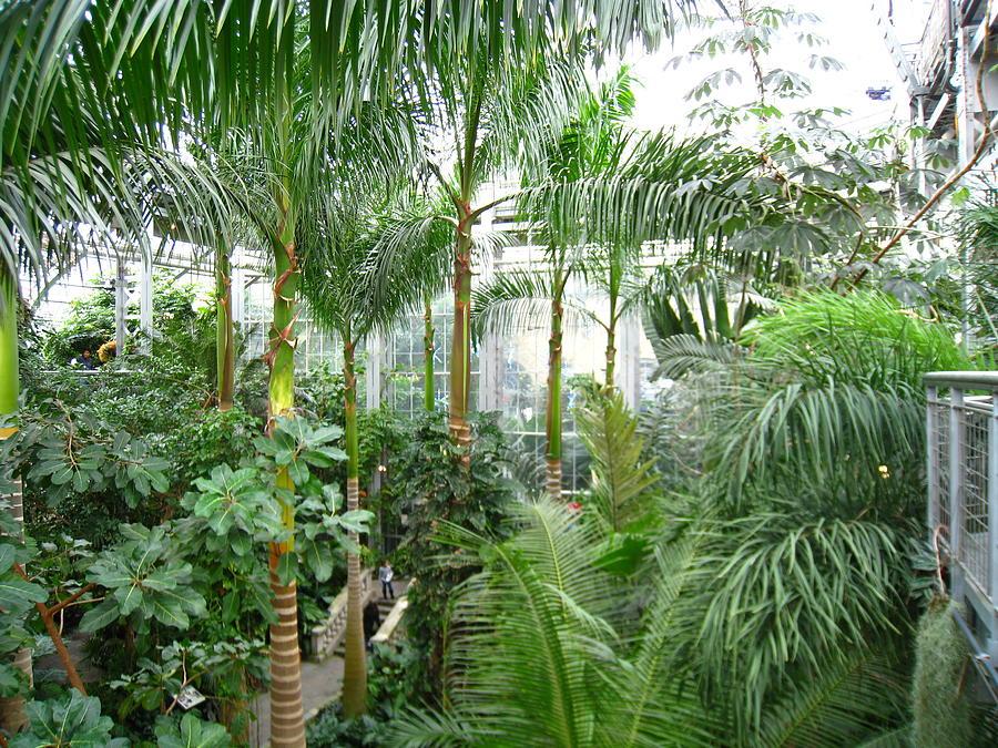 washington photograph washington dc us botanic garden 121227 by dc photographer - Botanical Garden Washington Dc