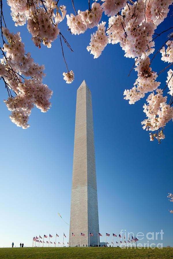 America Photograph - Washington Monument by Inge Johnsson